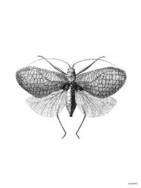 Poster - Moth - vanilla Fly