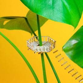 Amazing Plant-house - Crowsnest