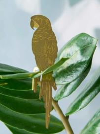 Plant Animal Parrot Papegaai