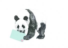 Panda met kaart a6