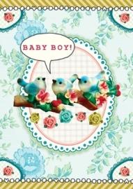 Baby boy birds