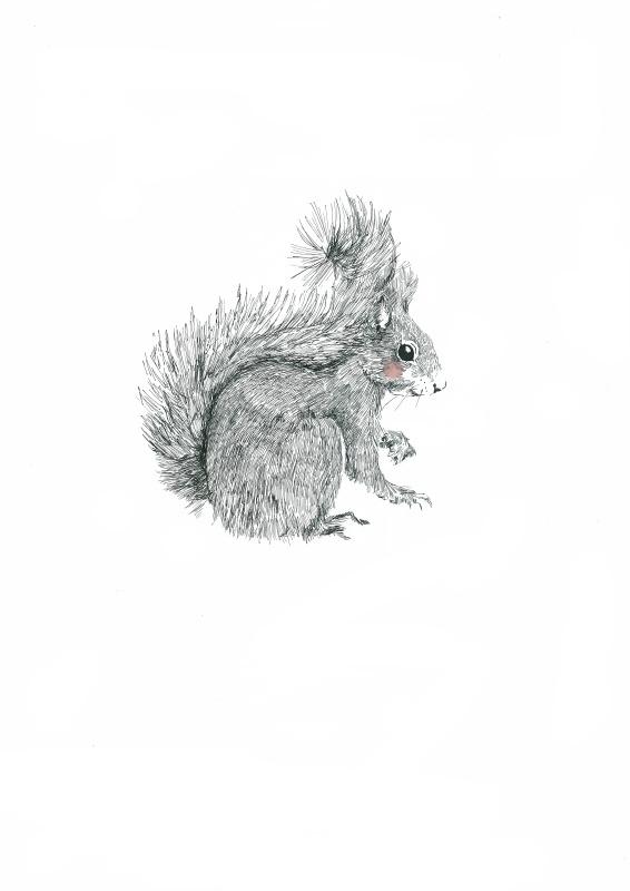 Eekhoorn a4