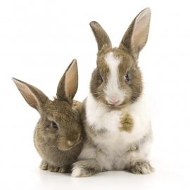 muursticker 2 konijntjes