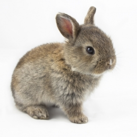 muursticker baby konijn
