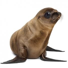 muursticker zeeleeuw
