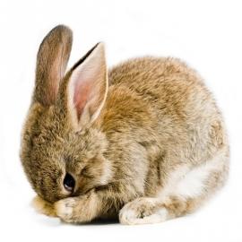 muursticker klein konijntje