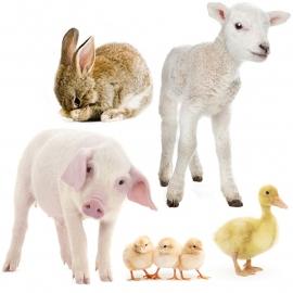 muurstickers boerderijdieren serie 1
