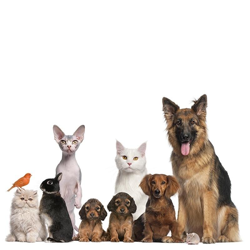 muursticker huisdieren familie