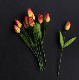 Tulp -  Red Cream Variegated
