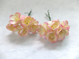 Cherry blossom flowers - Champagne Pink 2 Tone