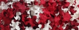 Gekruld Bloem - Mixed Red
