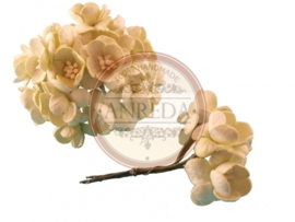 Cherry blossom flowers - Pale Green