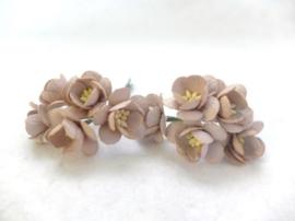 Cherry blossom flowers - Brown Tan