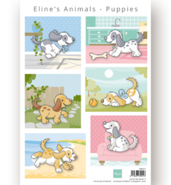 Marianne D Knipvel AK0079 - Eline's Animals Puppies