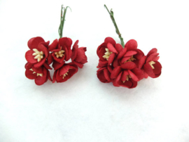 Cherry blossom flowers - Red