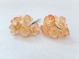 Cherry blossom flowers -  Orange Tangerine