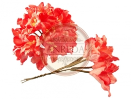 Lily - Coral Red