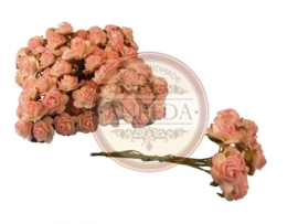 Mini Rose - Variegated Cream- Pink