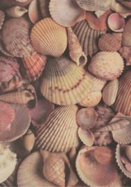 Wubie prints - Seashells Paper - 30x30
