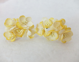 Cherry blossom flowers - Yellow 2 Tone