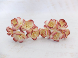 Cherry blossom flowers - Burgundy Cream Variegated