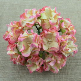 Curly Flowers Double - Pink Cream Variegated