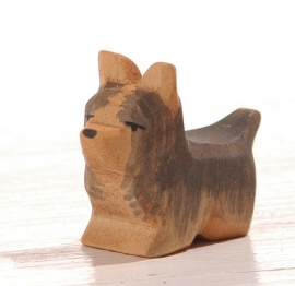 Yorkshire terrier, Ostheimer