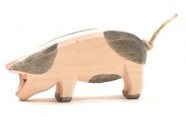 Gevlekt varken hoofd laag, Ostheimer