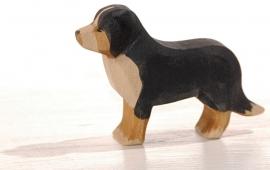 Bernen Sennenhond, Ostheimer