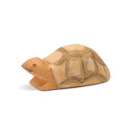 Schildpad jong, Ostheimer