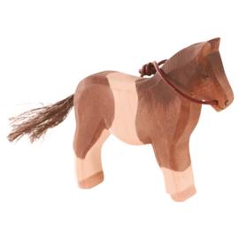 Pony, Ostheimer