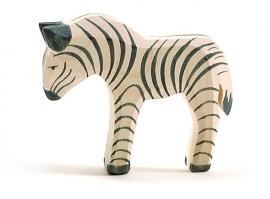 Zebra veulen, Ostheimer