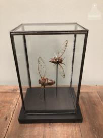 Grote vitrine insecten (144737)