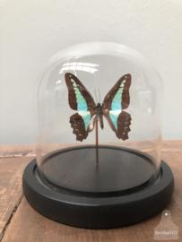 Stolp turquoise vlinder (144729) verkocht
