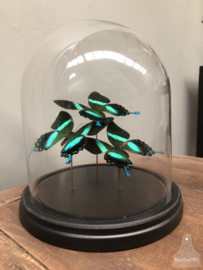 Stolp vlinder groen (144736)