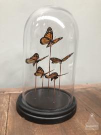 Stolp oranje vlinders (144735)