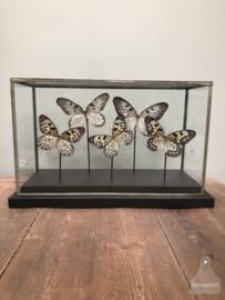 Grote vitrine witte vlinders (144739)