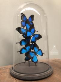 Stolp blauwe vlinders (144310)
