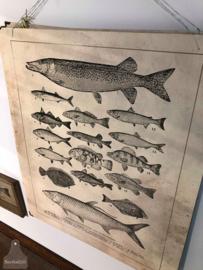 Schoolplaat vissen (138031)