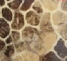 Giraf print 30.5 x 50 cm
