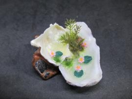 Vijfer oesterschelp