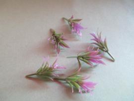Plantjes met paarse boven bladeren