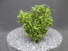 Boompje met groen blad