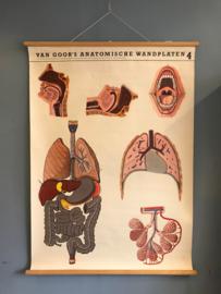 anatomische wandplaat 4