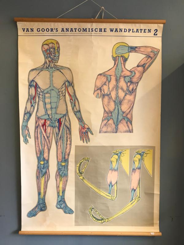 anatomische wandplaat 2