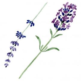 Lavendel | 50gr