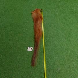 Bruine paardenstaart (1.20 cm)