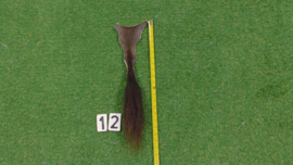 Bizonstaart 50 cm