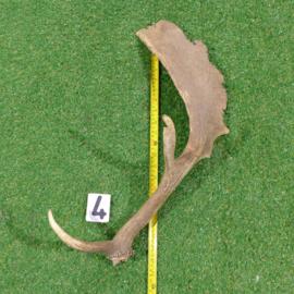 Damhert geweistang 56 cm