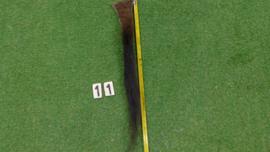 Bizonstaart 70 cm